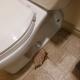 Toilet leaking at base